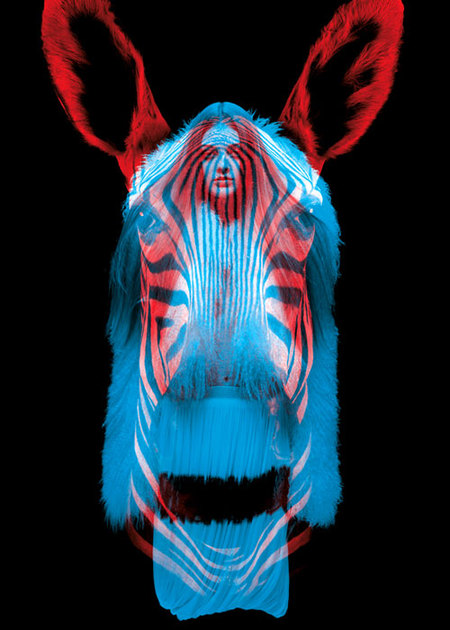 Образы животных (инсталляция вЛафайет). Изображение № 11.