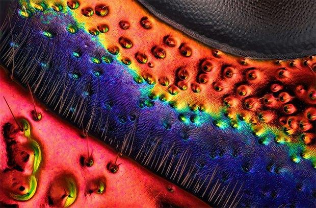 Что не видит глаз: Лучшие микроскопические фотографии этого года. Изображение № 15.