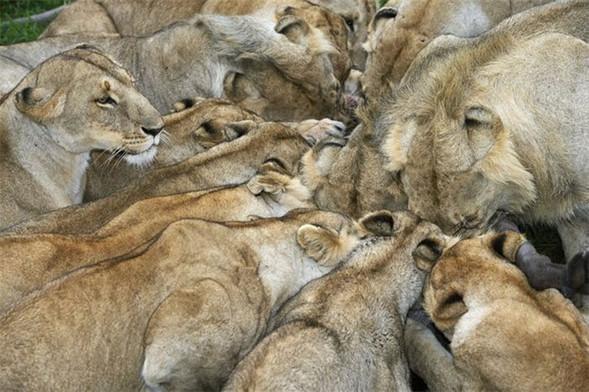 Лучшие снимки от National Geographic. Изображение № 12.