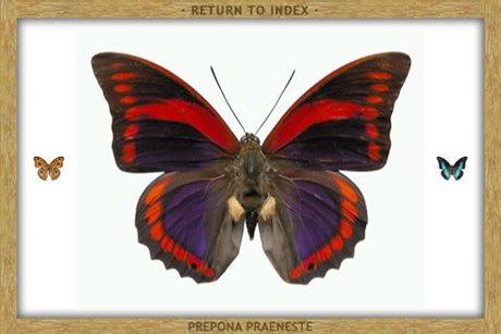 8 приложений  для наблюдения  за природой . Изображение № 55.