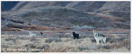 Победители Wildlife Photographer 2008. Изображение № 61.