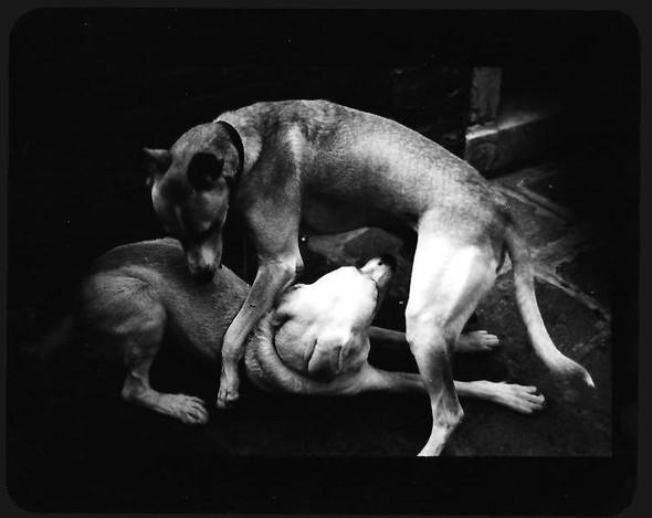 Джакомо Брунелли и«другие» животные. Изображение № 4.