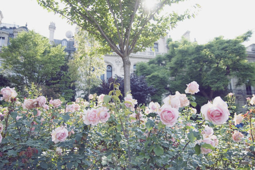 Изображение 12. Никогда не надо слушать, что говорят цветы. Надо просто смотреть на них и дышать их ароматом... Изображение № 12.