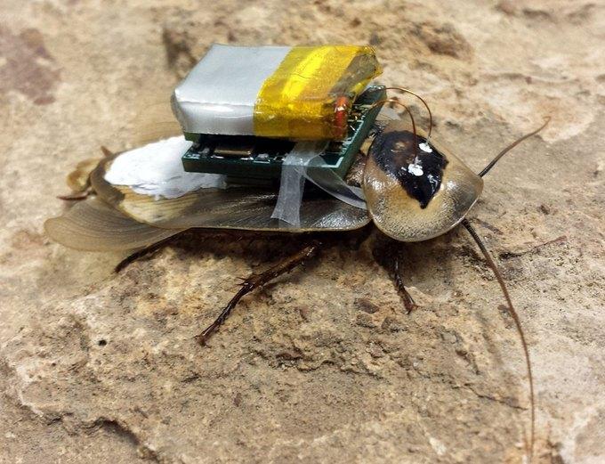 Учёные сделали пульт для управления тараканом. Изображение № 1.