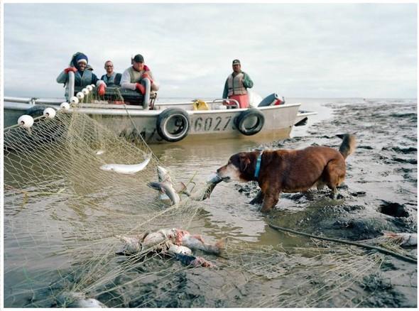 Corey Arnold. Морская фотография. Изображение № 23.