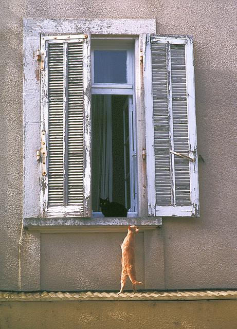 Cat. Window. Изображение № 14.
