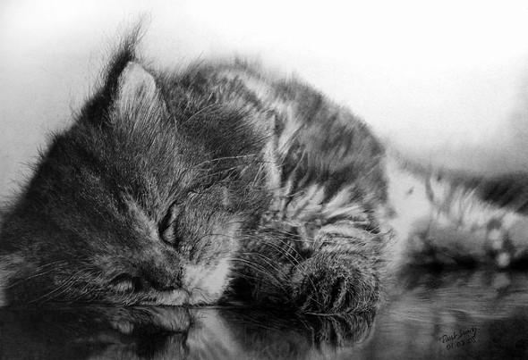 Paullung.и его коты. Изображение № 23.
