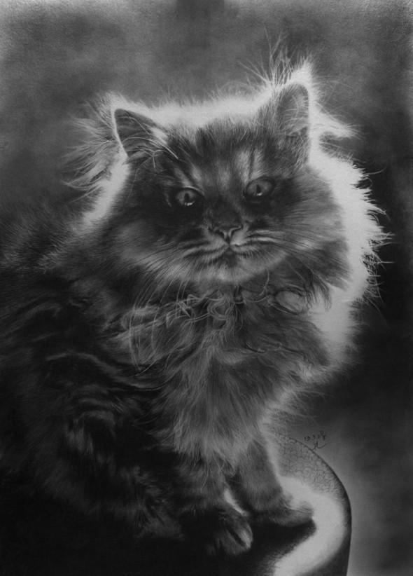 Кошки, люди, карандаш. Paul Lung. Изображение № 14.
