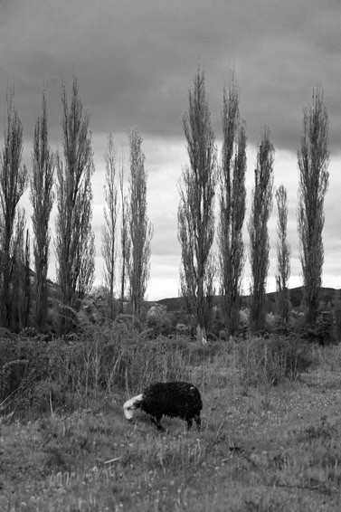 Черно-белые путешествия. Изображение № 45.