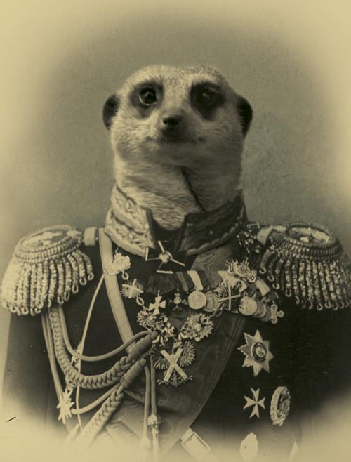 Александр Орлов - миллиардер, аристократ и мангуст. Изображение № 2.