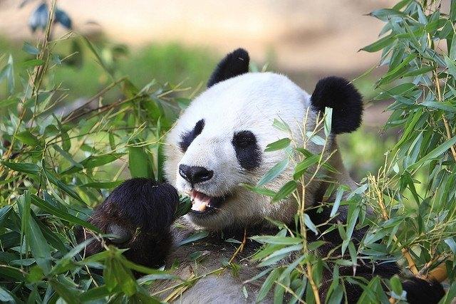 Количество видов животных сократилось вдвое за последние 40 лет. Изображение № 1.