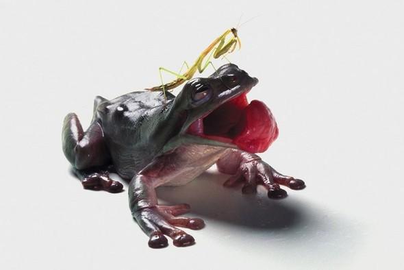 Катерина Челмерс: макро, которое заставит вас вздрогнуть. Изображение № 40.
