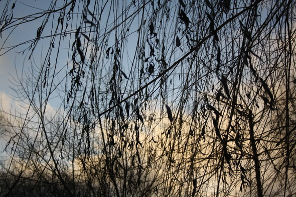 Голые ветви. Изображение № 2.