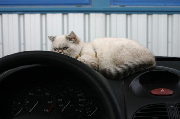 Котики и авто. Изображение № 13.