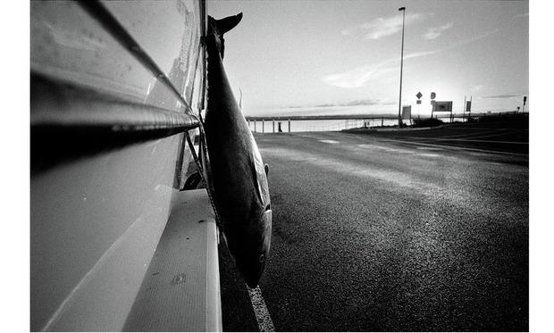 """Проект """"ХХI. МОЙ ТИХИЙ ОКЕАН"""". Эмиль Гатауллин. Австралия. Изображение № 4."""