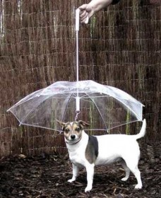 Сезон зонтов. Изображение № 8.