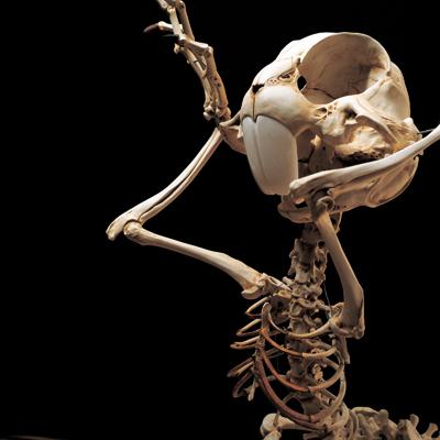 Мультяшные скелеты вшкафу ХюнгкуЛи. Изображение № 1.