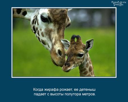 Животные иинтересные факты оних. Изображение № 3.