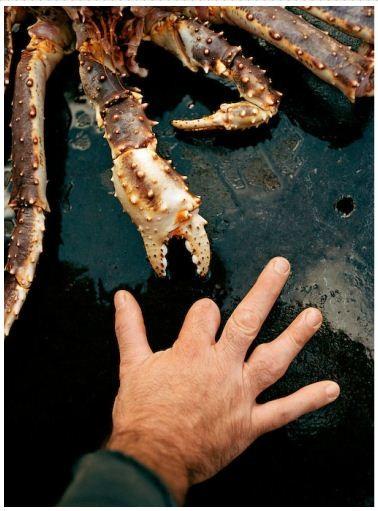 Corey Arnold. Морская фотография. Изображение № 11.