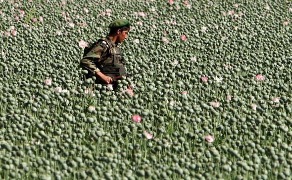 Афганистан. Военная фотография. Изображение № 294.