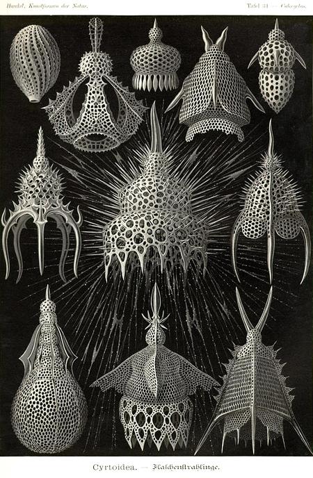Причудливые формы природы. Изображение № 12.