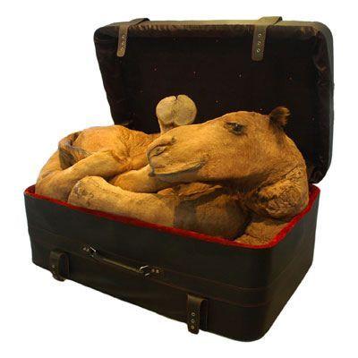 Мертвые животные всовременном искусстве. Изображение № 2.