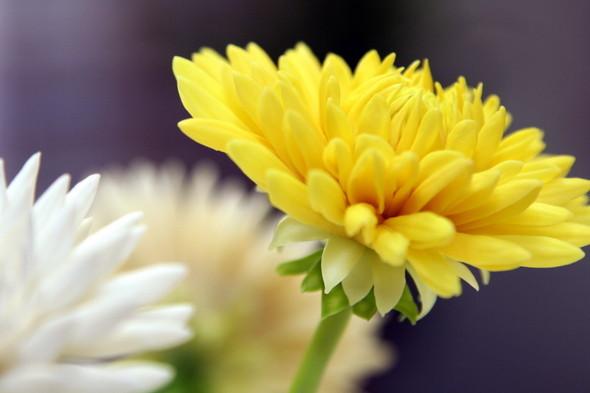 Керамическая флористика. Цветы из глины, ручная работы. Изображение № 10.