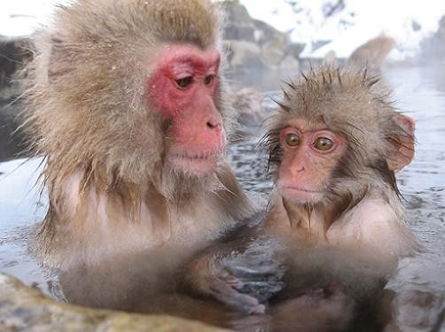И даже обезьянам нужен отдых. Изображение № 8.