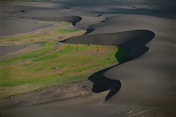 Коровы на пастбище между дюнами. Чили. Изображение № 12.