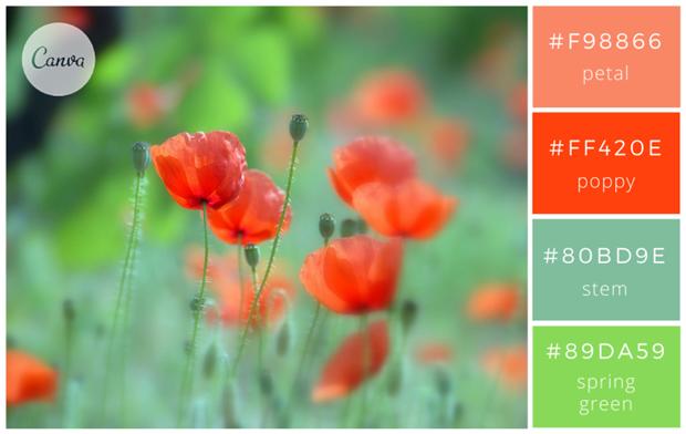 Сервис Canva предложил 100 удачных сочетаний цветов. Изображение № 1.