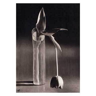 Андре Кертеш 1894–1985. Изображение № 3.
