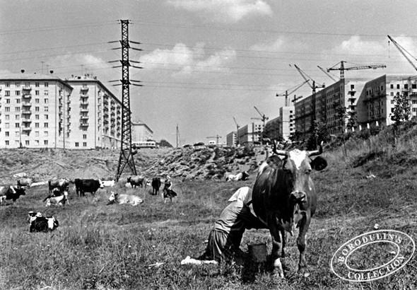 Ленинский проспект, 1957 г.. Изображение № 148.