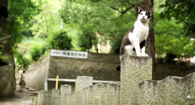 Для Хиросимы сделали Street View c кошками . Изображение № 2.