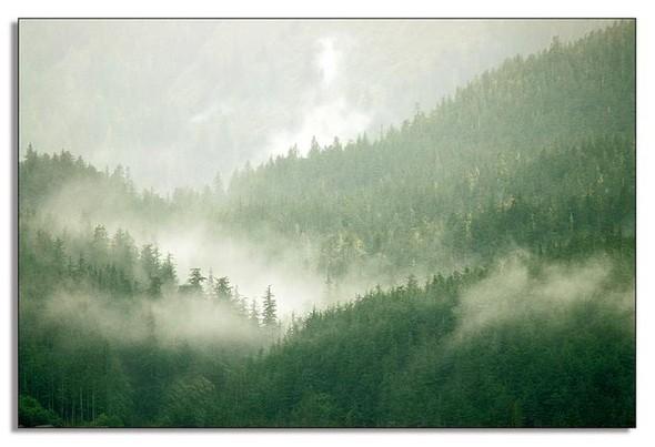 Nature. Изображение № 9.