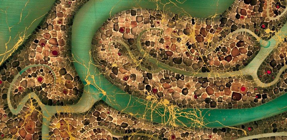Головной мозг на загадочных картинах нейробиолога. Изображение № 9.
