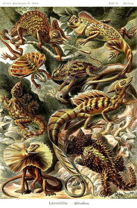 Причудливые формы природы. Изображение № 51.