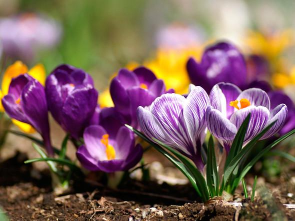 Весна идет! Создаем весеннее настроение. Изображение № 7.