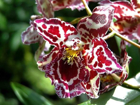 Орхидея. Изображение № 4.