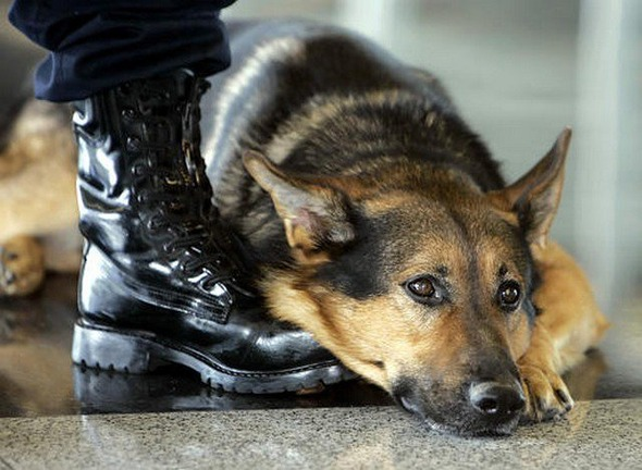 10 самых известных собак в истории по версии журнала WOW!. Изображение № 6.