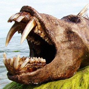 Тест: отличите  настоящее животное  от вымышленного. Изображение № 84.