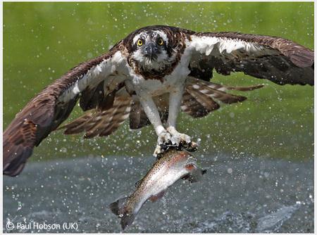 Победители Wildlife Photographer 2008. Изображение № 12.