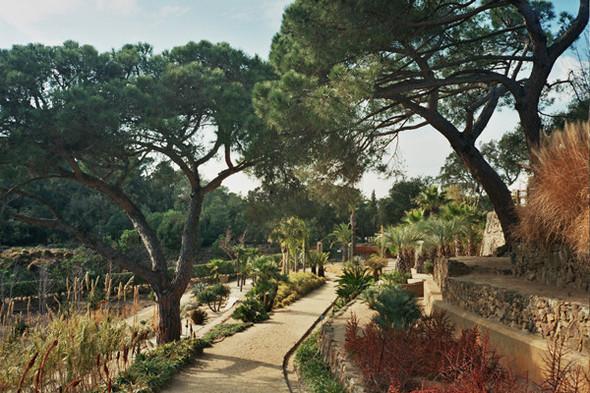 Ботанический сад. Изображение №52.