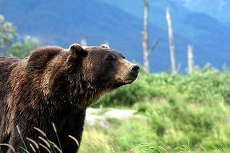 Grizzly Bear – Veckatimest. Изображение № 3.