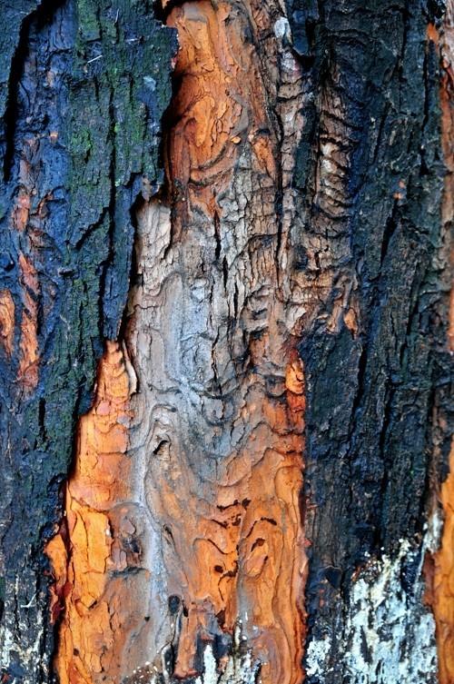 Treefilia. Изображение № 10.