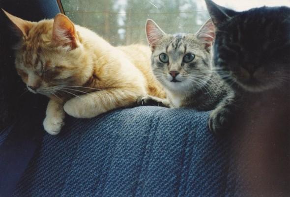 Котики и авто. Изображение № 2.