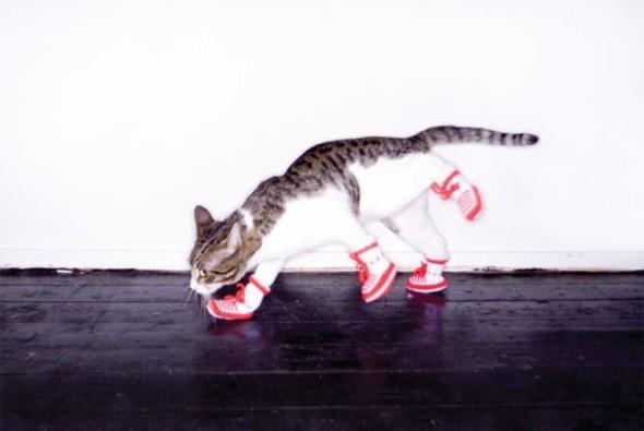 New animal models - животные в фэшн съемках. Изображение № 10.