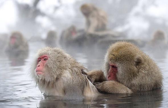 И даже обезьянам нужен отдых. Изображение № 13.
