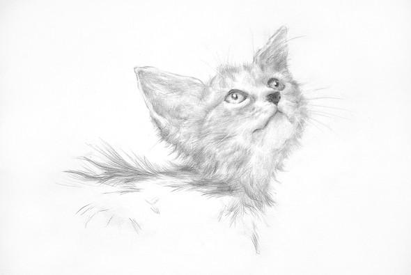 Изображение 9. Графика и иллюстрации Александра Кожухова.. Изображение № 13.