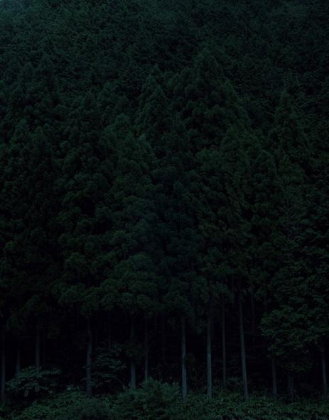 Темный лесКейты Сигиуры. Изображение № 5.