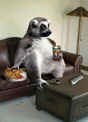 В мире животных: Герои «Мадагаскара» в мемах, рекламе и видеороликах. Изображение № 79.